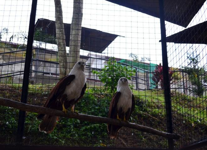D'Leonor Inland Resort and Adventure Park photo, Zoo at D'Leonor Resort (2)